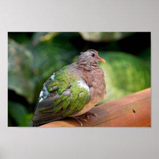 Emerald Dove Profile and Perch Poster