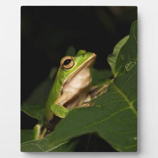 Emerald eye tree frog plaque