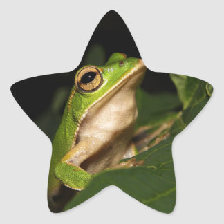 Emerald eye tree frog star sticker