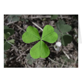 Emerald Green Irish Shamrock Photograph Card