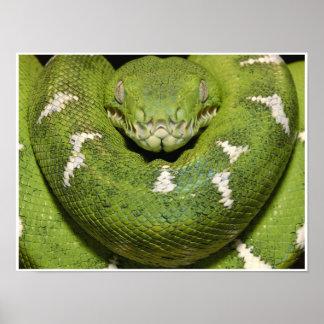 Emerald Tree Boa Snake Art Print Poster