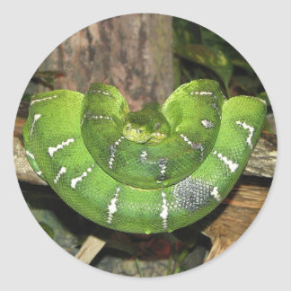 Emerald Tree Boa Snake Sticker