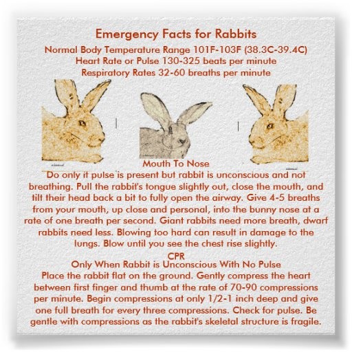 Bunny Trivia 9 Amazing Facts About Pet Rabbits: Emergency Facts For Flemish Giant Rabbits Print