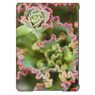 Emerging bud of an Echeveria Plant iPad Air Case