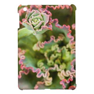 Emerging bud of an Echeveria Plant iPad Mini Cover