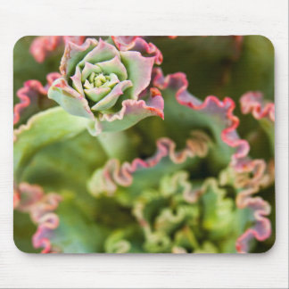 Emerging bud of an Echeveria Plant Mouse Mat