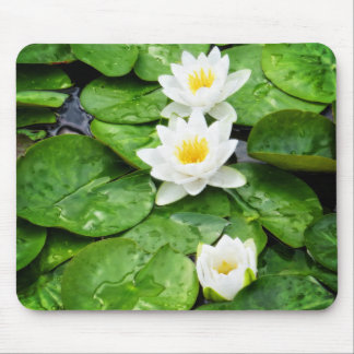 Emerging Lotus Flowers Mouse Pad