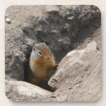Emerging Rodent Photo Coasters