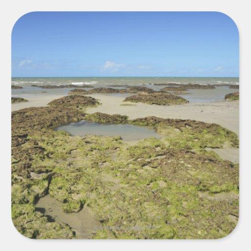 Emmagen Beach, Daintree National Park (UNESCO 4 Stickers