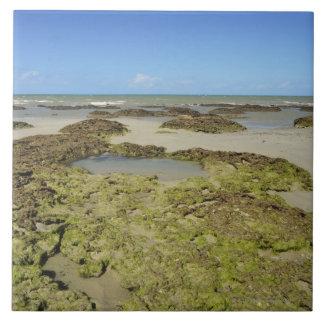 Emmagen Beach, Daintree National Park (UNESCO 4 Tile