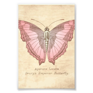 Emperor Butterfly Specimen Photo Print