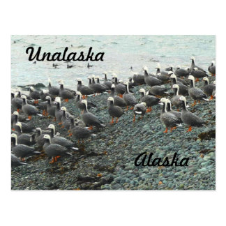 Emperor Geese on beach Postcard