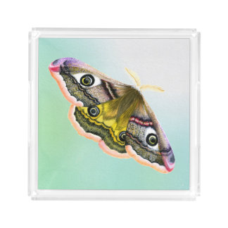 Emperor Hawk Moth Painting Watercolour Tray