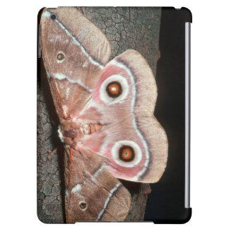 Emperor Moth (Saturniidae) On Tree