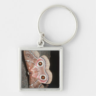Emperor Moth (Saturniidae) On Tree Keychain