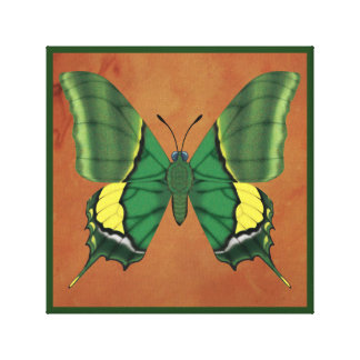 Emperor of India Butterfly Canvas Print