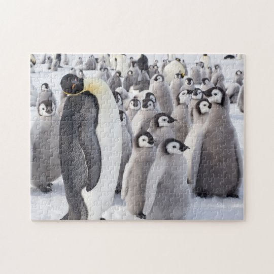 Emperor Penguin adult with chicks Jigsaw Puzzle
