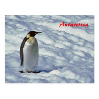 Emperor Penguin Antarctica postcard