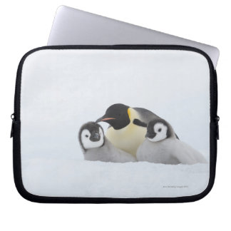 Emperor Penguin (Aptenodytes forsteri) 2 Laptop Sleeve