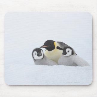 Emperor Penguin (Aptenodytes forsteri) 2 Mouse Pad