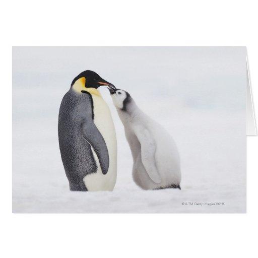 Emperor penguin (Aptenodytes forsteri), chick Greeting Card