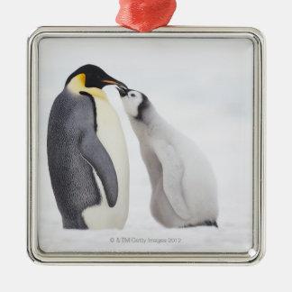Emperor penguin (Aptenodytes forsteri), chick Christmas Ornament