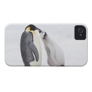 Emperor penguin (Aptenodytes forsteri), chick iPhone 4 Case
