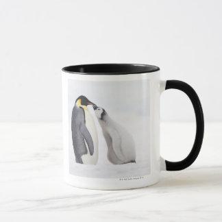 Emperor penguin (Aptenodytes forsteri), chick Mug