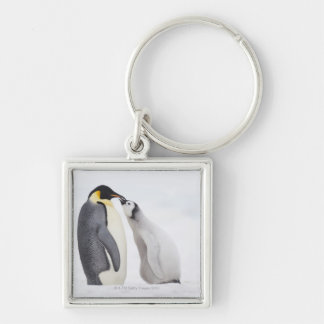 Emperor penguin (Aptenodytes forsteri), chick Silver-Colored Square Key Ring