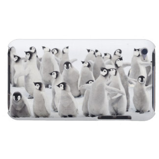 Emperor penguin (Aptenodytes forsteri), group of Barely There iPod Cover