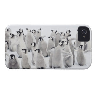 Emperor penguin (Aptenodytes forsteri), group of iPhone 4 Case