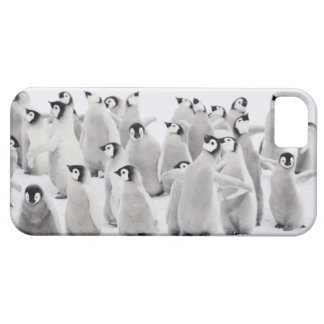Emperor penguin (Aptenodytes forsteri), group of iPhone 5 Case