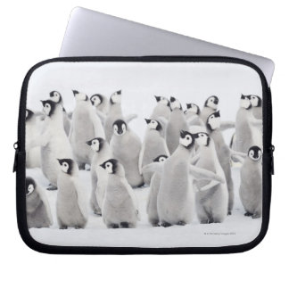 Emperor penguin (Aptenodytes forsteri), group of Laptop Sleeve