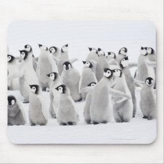 Emperor penguin (Aptenodytes forsteri), group of Mouse Mat