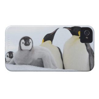Emperor Penguin (Aptenodytes forsteri) iPhone 4 Case