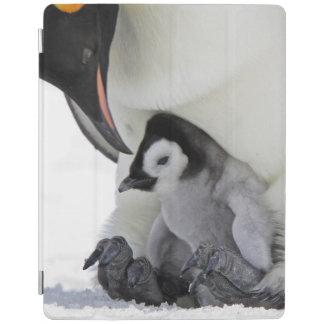 Emperor Penguin At Snow Hill Island iPad Cover