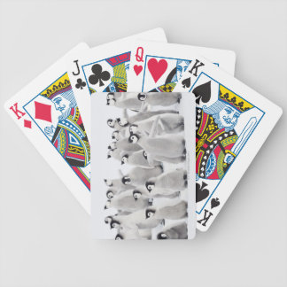 Emperor penguin bicycle playing cards