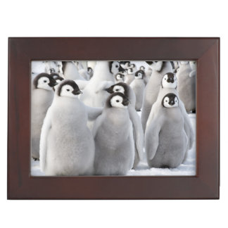 Emperor Penguin Buddies gift box