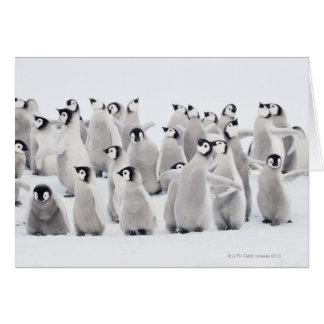 Emperor penguin card