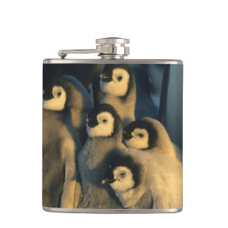 Emperor Penguin chicks in creche, Aptenodytes Hip Flask