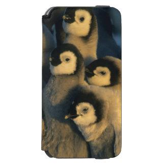Emperor Penguin chicks in creche, Aptenodytes Incipio Watson™ iPhone 6 Wallet Case