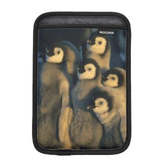 Emperor Penguin chicks in creche, Aptenodytes iPad Mini Sleeve