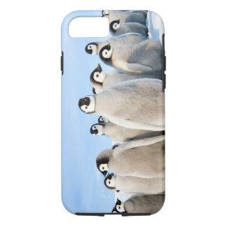 Emperor Penguin Chicks iPhone 7 tough case