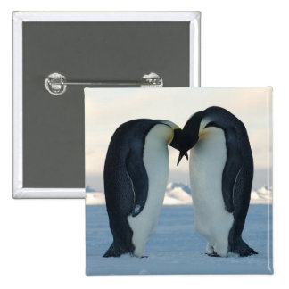 Emperor Penguin Courtship 15 Cm Square Badge