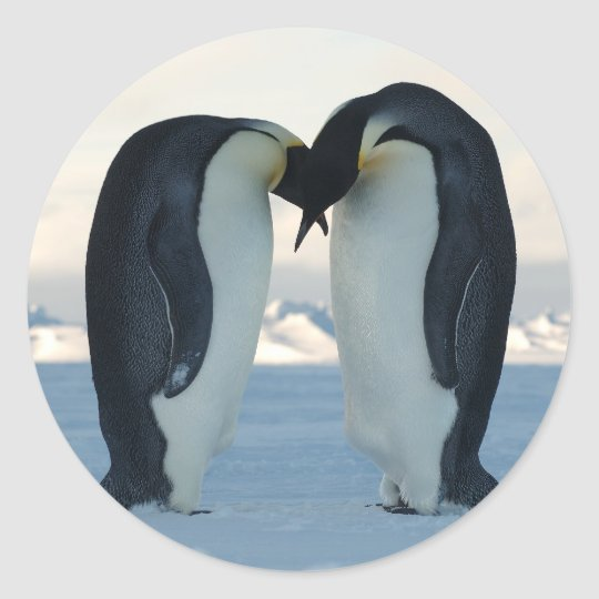 Emperor Penguin Courtship Classic Round Sticker