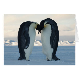 Emperor Penguin Courtship Greeting Card