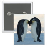 Emperor Penguin Courtship Pins