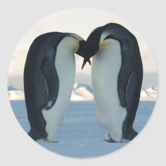 Emperor Penguin Courtship Round Sticker