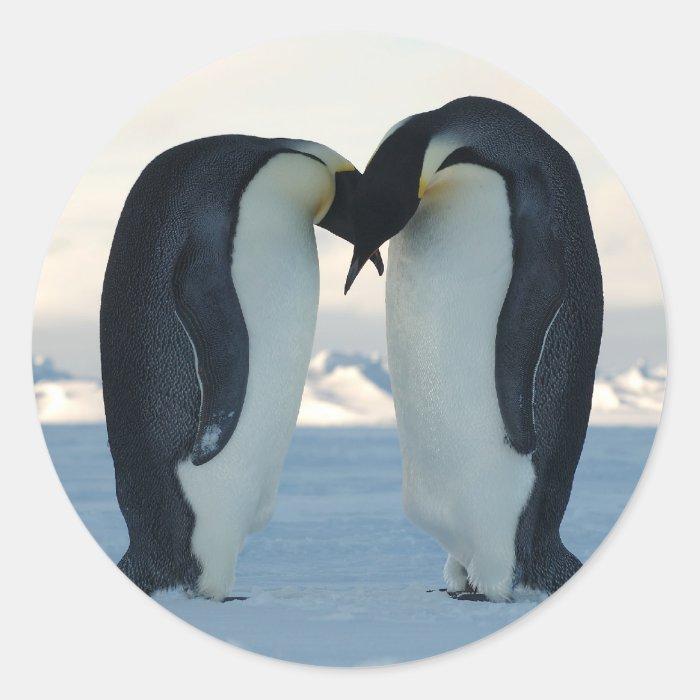 Emperor Penguin Courtship Round Sticker