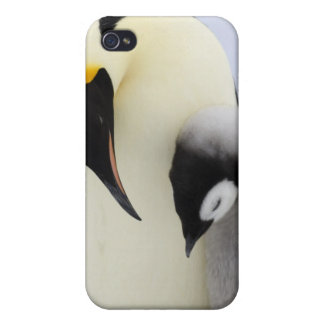 Emperor Penguin looking at chick Case For The iPhone 4